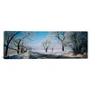 iCanvasArt Road Passing Through Winter Fields, Illinois Photographic Print on Canvas