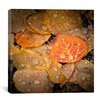 "iCanvas ""Fall Rains #2"" Canvas Wall Art by Dan Ballard"