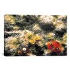 iCanvas Marine and Ocean 'Spiral Coral #2' Photographic Print on Canvas