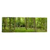 iCanvas Panoramic 'Spring in Thetford Forest, Norfolk, England' Photographic Print on Canvas