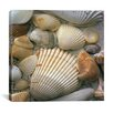 "<strong>iCanvasArt</strong> ""Sea Shells"" Canvas Wall Art by J.D. McFarlan"