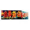 iCanvasArt Panoramic Strands of Chili Peppers Hanging in a Market Stall, Pike Place Market, Seattle, King County, Washington State Photographic Print on Canvas