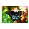 iCanvas Photography Swallowtail Butterfly Photographic Print on Canvas
