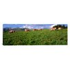 iCanvas Panoramic Switzerland, Cows Grazing in the Field Photographic Print on Canvas
