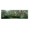 iCanvas Panoramic View of Spring Blossoms on Cherry Trees Photographic Print on Canvas