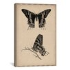 iCanvasArt Animal Art Vintage Butterfly Scientific Drawing Painting Print on Canvas
