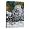 "iCanvas ""Snowy Owl"" Canvas Wall Art by William Vanderdasson"