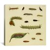 "iCanvas ""Supplement Plate 17"" Canvas Wall Art by Cramer and Stoll"