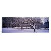 iCanvas Panoramic Trees Covered with Snow in a Park, Central Park, New York City, New York state Photographic Print on Canvas