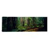 <strong>iCanvasArt</strong> Panoramic Trees in a Forest, Hoh Rainforest, Olympic National Park, Washington State Photographic Print on Canvas
