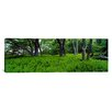 iCanvas Panoramic Trees in a Forest, North Carolina Photographic Print on Canvas