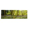 iCanvas Panoramic Trees in a Forest, Thursford Wood, Norfolk, England Photographic Print on Canvas