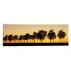 iCanvasArt Panoramic Tree Alley at Sunset, Hohenlohe, Baden-Wurttemberg, Germany Photographic Print on Canvas