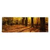 iCanvasArt Panoramic Tree Lined Road, Massachusetts Photographic Print on Canvas