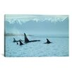 "iCanvas ""Silent Passage - Orcas"" Canvas Wall Art by Ron Parker"