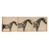iCanvasArt Animal Art 'The Anatomy of The Horse Collage' by George Stubbs Painting Print on Canvas