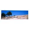 iCanvas Panoramic Trees on a Mountain, Stone Mountain, Atlanta, Fulton County, Georgia Photographic Print on Canvas