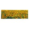 <strong>iCanvasArt</strong> Panoramic Sunflowers (Helianthus annuus) in a Field, Bouches-Du-Rhone, Provence, France Photographic Print on Canvas