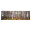 <strong>iCanvasArt</strong> Panoramic Birch Trees in a Forest, Narke, Sweden Photographic Print on Canvas