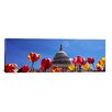 iCanvas Panoramic Tulips with a Government Building in The Background, Capitol Building, Washington DC Photographic Print on Canvas