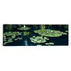 <strong>iCanvasArt</strong> Panoramic Water Lilies in a Pond, Denver Botanic Gardens, Denver, Colorado Photographic Print on Canvas