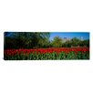 iCanvas Panoramic Tulips in a Garden, Boston Public Garden, Boston, Massachusetts Photographic Print on Canvas