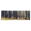 iCanvas Panoramic Trees in the Forest, South Bohemia, Czech Republic Photographic Print on Canvas
