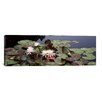 <strong>iCanvasArt</strong> Panoramic Water Lilies in a Pond, Sunken Garden, Olbrich Botanical Gardens, Madison, Wisconsin Photographic Print on Canvas
