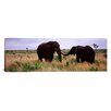 iCanvas Panoramic Two African Elephants Kruger National Park, South Africa Photographic Print on Canvas