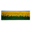 <strong>iCanvasArt</strong> Panoramic Sunflower Field, Maryland Photographic Print on Canvas