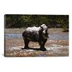iCanvasArt 'White Rhino' by Pip McGarry Photographic Print on Canvas