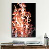 iCanvasArt Marine and Ocean Red Gorgonian Coral #2 Photographic Print on Canvas