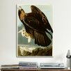 iCanvas 'Golden Eagle' by John James Audubon Painting Print on Canvas
