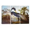 "iCanvas John James Audubon Louisiana Heron From ""Birds of America"" 3 Piece on Canvas Set"
