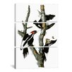 iCanvas John James Audubon Ivory-billed Woodpecker1829 3 Piece on Canvas Set