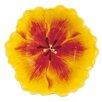 "Fitz and Floyd Flower Market 6.5"" Tulip Bowl"