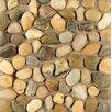 Bedrosians Hemisphere Random Sized Pebble Stone Polished Mosaic Tile in Kona Sands