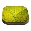 KESS InHouse Every Leaf a Flower by Robin Dickinson Coaster (Set of 4)