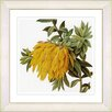 Studio Works Modern Vintage Botanical No. 44W by Zhee Singer Framed Giclee Print Fine Wall Art