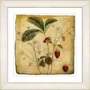Studio Works Modern Vintage Botanical No. 06A  by Zhee Singer Framed Giclee Print Fine Wall Art
