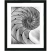 "Studio Works Modern ""Cambrian Sea Shell"" by Zhee Singer Framed Fine Art Giclee Painting Print"