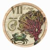 Thirstystone Sea Life Coaster (Set of 4)