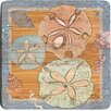 Thirstystone Sealife Sand Dollar Bamboo Coaster (Set of 4)