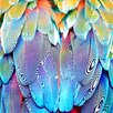 "<strong>Salty & Sweet</strong> ""Parrot Feathers"" Graphic Art on Canvas"