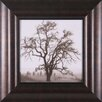Art Effects Country Oak Tree Framed Photographic Print