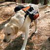 Wander Pack Dog Backpack