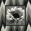 Obvious Place Flower Photographic Print on Canvas in Black and White