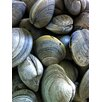 <strong>Graffitee Studios</strong> Coastal Clams Photographic Print on Canvas