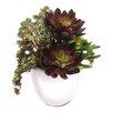 Dalmarko Designs Succulent Mix in Ceramic Planter