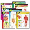 Trend Enterprises Human Body Learning chart Combo Pack, 7 Charts, 17 x 22
